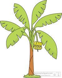 banana tree clipart starter template for bootstrap fee