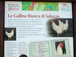 animali da cortile definizione aree protette po torinese razze autoctone e carni gallina