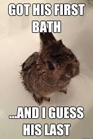 Bunny Meme - got his first bath and i guess his last weak baby bunny