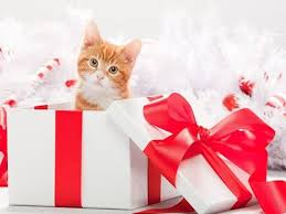 294 best christmas cats and kittens images on pinterest