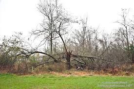 Trees Backyard Backyard Wilderness Hurricane Sandy And An Angel Backyard