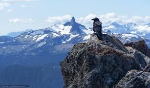 corbeau bureau tlcharger fond d ecran noyaux montagnes corbeau oiseau fonds d