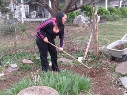Types Of Hoes For Gardening - gardens scod public blog