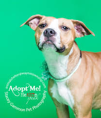 adoptable dogs at the alan purcell wayne animal shelter stacey