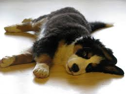 dog and hardwood floors how to protect your hardwood floors from your dog