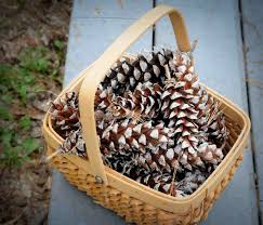 gonna stuff a chicken ideas for pine cone christmas crafts for kiddos