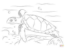 cute hawksbill sea turtle coloring page free printable coloring