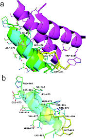 What Is 138 311 As A Percent A Novel Peptide Stapling Strategy Enables The Retention Of Ring