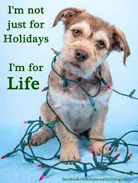 236 best howliday dogs images on pinterest animals merry