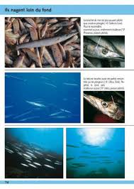 guide d u0027identification des poissons marins europe et méditerranée