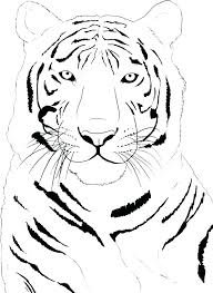 coloring page tiger paw coloring page of a tiger affan