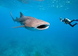 41 best scuba bucket list images on pinterest scuba diving