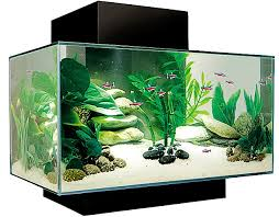 the age of aquariums the 3 900 fish tank daily mail