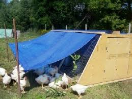 free chicken coop plans to build your own chicken coop