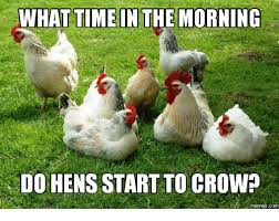 Hen Meme - 25 best memes about rooster crowing images rooster crowing