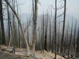 Wildfire Weed by Tending Our Forests Soper Wheeler Company Soper Wheeler Company