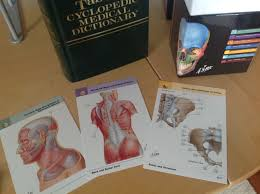 flash cards anatomy image collections human anatomy learning