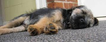 How Do You Get The Urine Smell Out Of Carpet How To Get A Dog Urine Smell Out Of The Carpet Cuteness