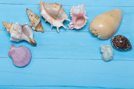 assorted seashells on blue wooden background flat lay copyspace