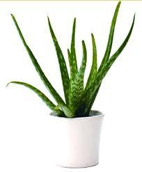 plante d駱olluante chambre chambre plante dépolluante votre architecte en ligne plante