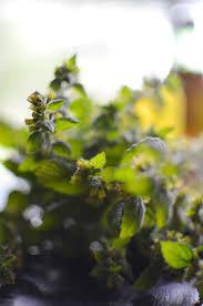 312 best stonecrest gardens images on pinterest lavender spring