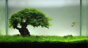 Aquascape Bonsai Driftwood The