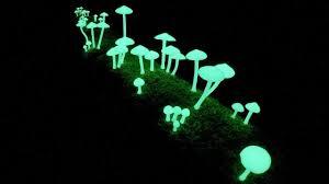 glow in the glow in the mushrooms