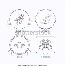 jellyfish crab dolphin icons butterfly linear stock vector