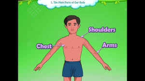 learn grade 1 evs parts of the body for kids kidsclassroom