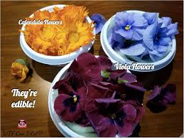 edible flowers for sale plant salad with edible flowers can i eat