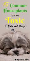 poisonous interior plants for dogs u0026 cats poisonous plants