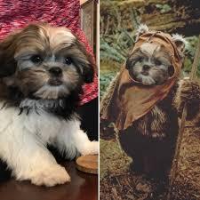 Ewok Meme - put me like 盞 our new pup is definitely part ewok