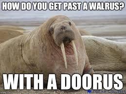 Walrus Meme - walrus memes imgflip
