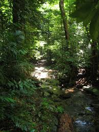 native plants in the tropical rainforest daintree rainforest wikipedia