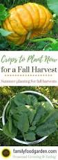 Fall Vegetable Garden Plants by How To Plant Your Fall And Winter Garden Winter Garden Plants