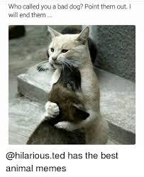 Best Animal Memes - 25 best memes about bad dog bad dog memes