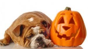 fall autumn dog health and safety duty free pets colorado u0027s