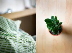 pflanzen für schlafzimmer pflanzen im schlafzimmer gut oder schlecht