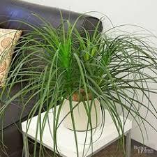 indoor plants for low light prayer plant night prayer and sunlight