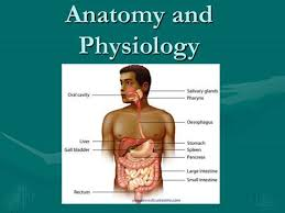 Best Anatomy And Physiology Textbook Introduction To Anatomy And Physiology Ht Online Human Anatomy And