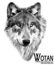 Wolf Indian Tattoos - indian tattoos wolf wolves tattoos