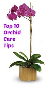 orchids care top 10 orchids care tips diy ideas orchid