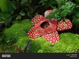Largest Flower In The World Corpse Flower Was Made Of Interlocking Plastic Bricks Toy