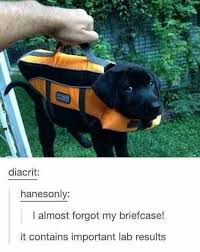 Best Dog Memes - the best dog memes on the internet this week
