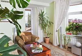 decor plants home home decor plants interior lighting design ideas