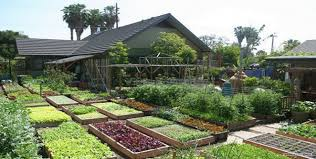 self sustaining garden diy self sufficient how to grow 6000 lbs of food on 1 10th acre