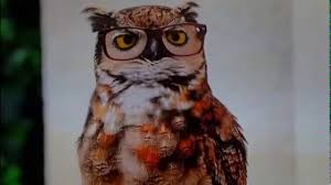 americas best owl commercial actress america s best glasses owl commercial youtube