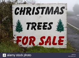 where to buy trees to sell rainforest islands ferry