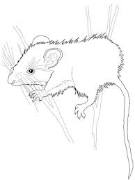 deer mouse coloring free printable coloring pages