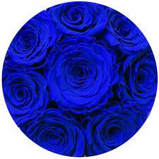 royal blue the million basic royal blue suede box royal blue eternit